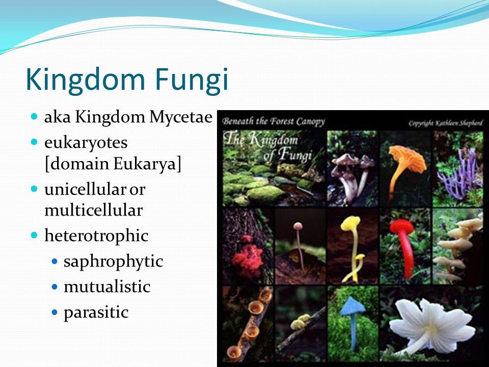 Kingdom Fungi aka Kingdom Mycetae eukaryotes [domain Eukarya]